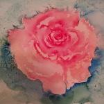 pink rose aquarell<br> papier 31x41 cm