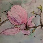 magnolia aquarell und tusche <br>papier 41x31 cm