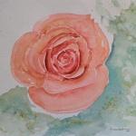rose aquarell <br> papier 31x23 cm